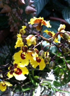 flowers4FB